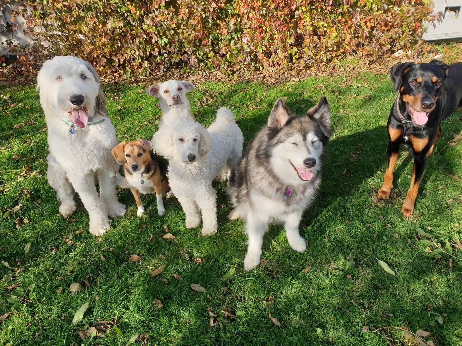 Hyggehold / familiehunde hold