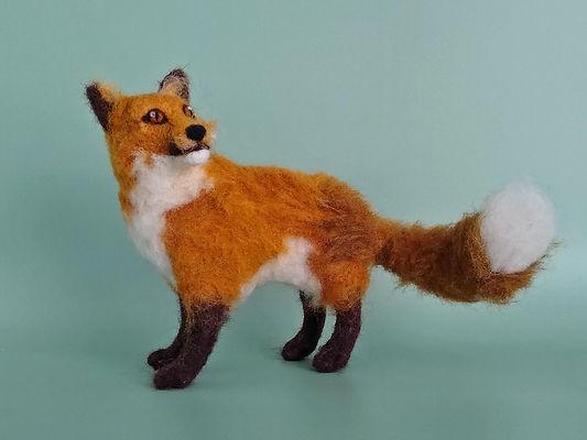 zapp size red fox.jpg