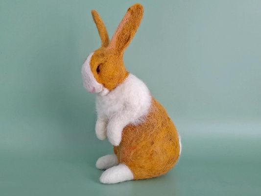 zapp size dutch rabbit.jpg