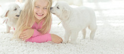 Girl playing with dogs after carpet cleaning_A&K_Carpet_Cleaning_Renton_WA
