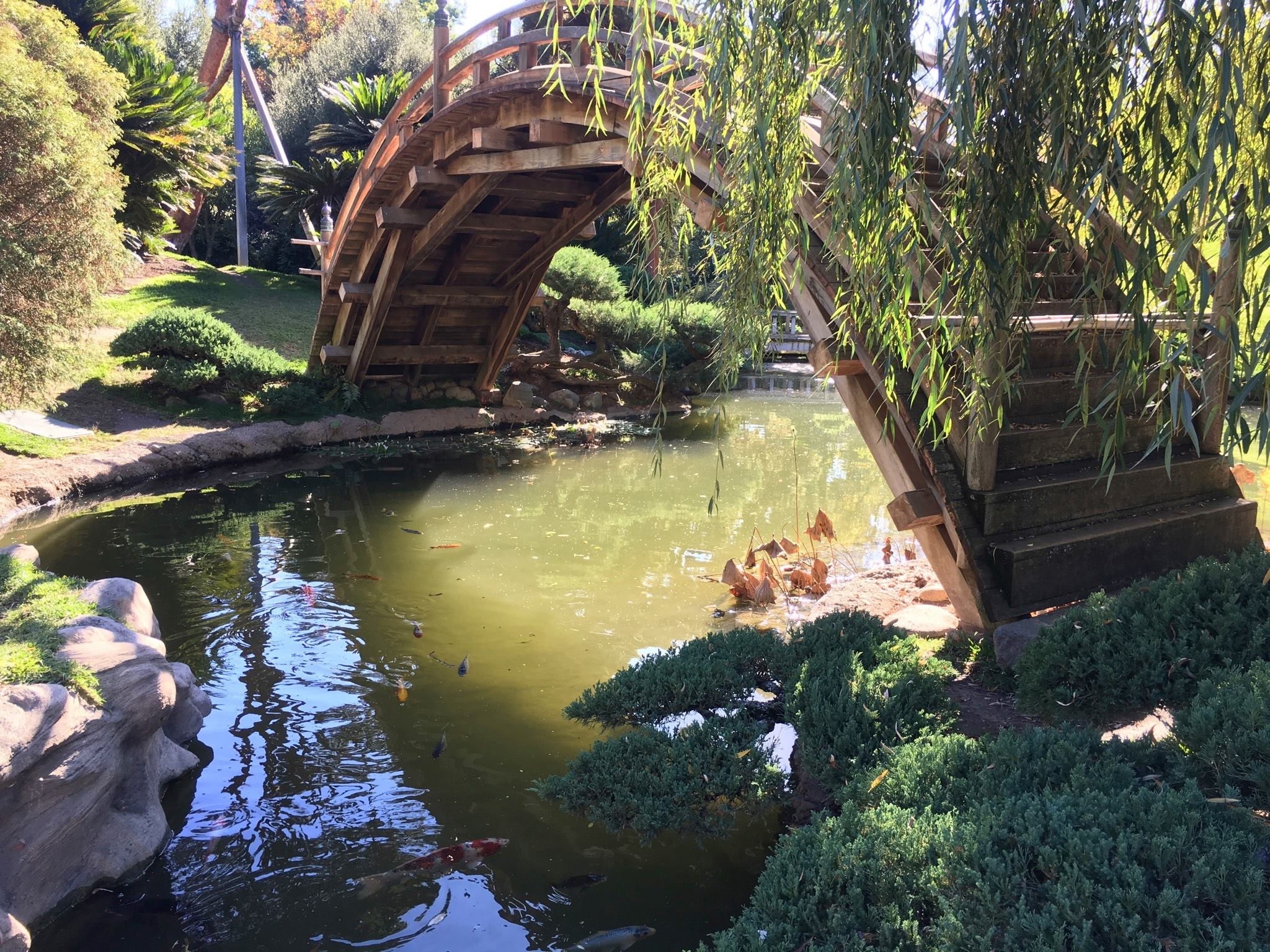 Huntington Library (Chinese & Japanese Gardens)