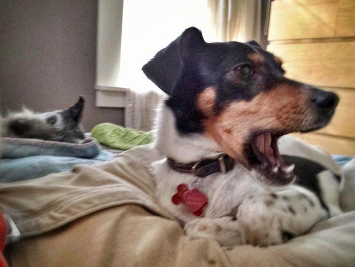 Facebook - Petunia demures as Atticus kicks it.jpg