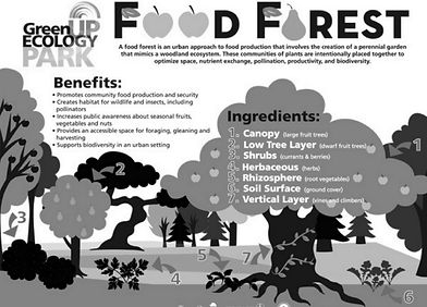 Food Forest Pic for Grace Notes.jpg