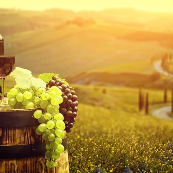 The Summer Sip: A Wine Tasting Event