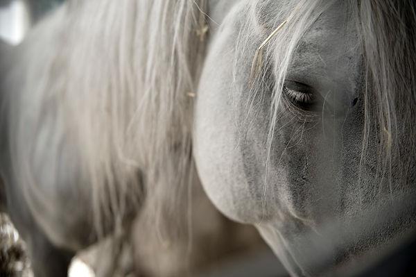 Animals_Sabrina_Teggar_0899.jpg