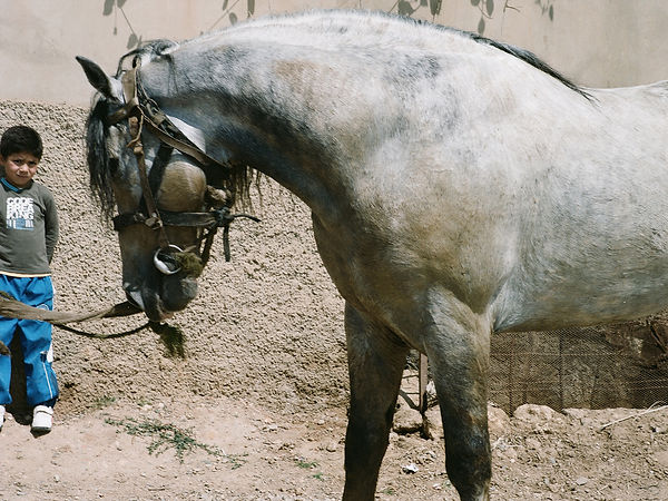 sabrina_teggar_algerie2012_18.jpg
