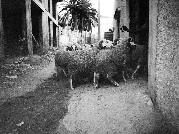 sabrina_teggar_algerie2018147.jpg