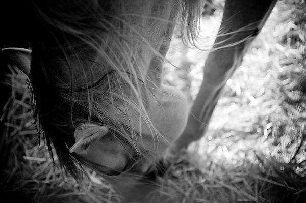 Animals_Sabrina_Teggar_0898.jpg