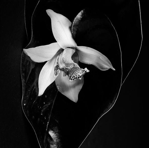 orchide_Sabrina_Teggar.jpg