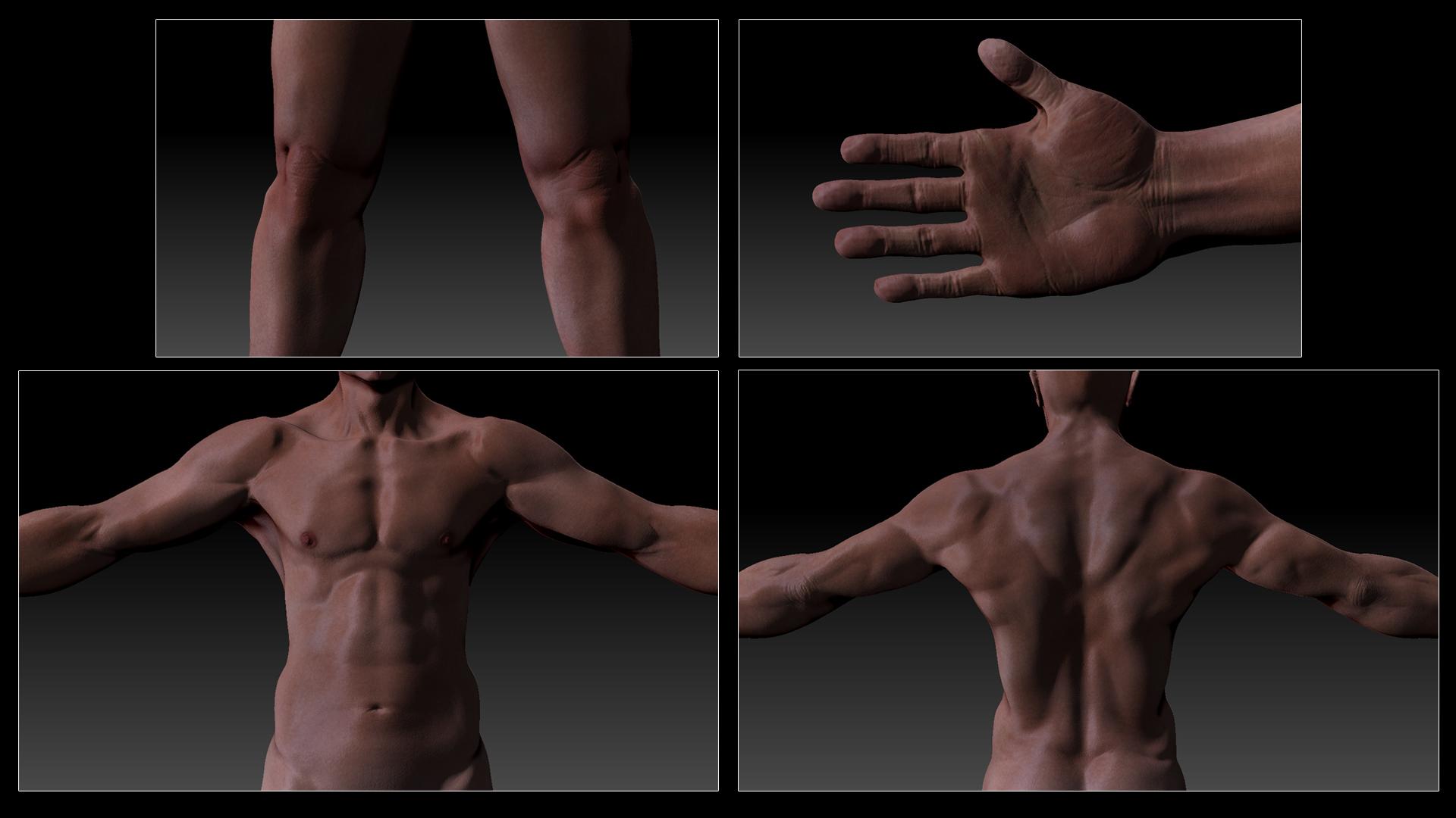 AnatomyStudyMale