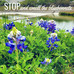 Stop and Smell the Bluebonnets:  5 Quick Mindfulness Tools to Alleviate Stress