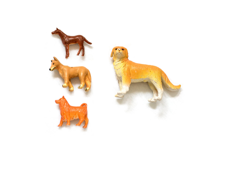 new dogs .jpg