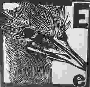 Amanda Lugg ABC Australian birds