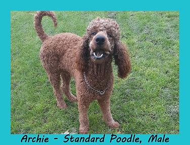 Archie..jpg