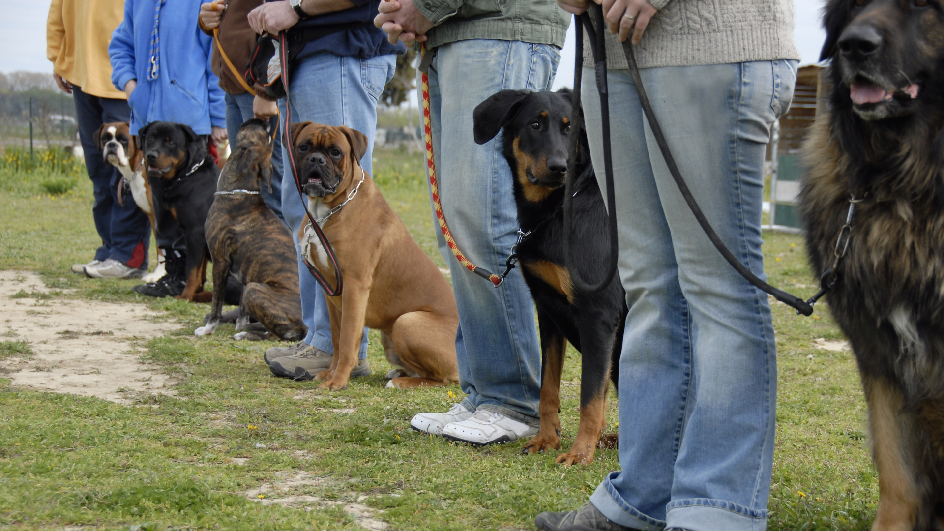 Group Dog Training.jpg