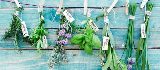 plantes pour soigner les plantes