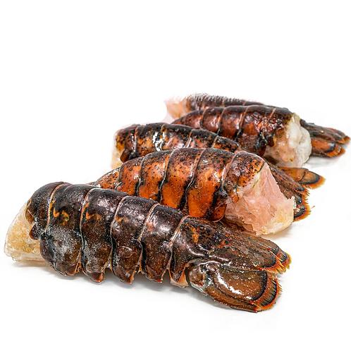 美國緬因州 龍蝦尾