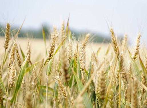 Principais pontos da nova lei do AGRO Lei 13.986/2020