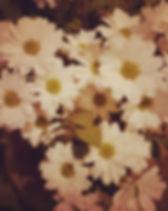 Daisies 🌼.jpg