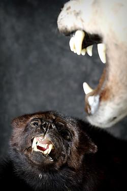 7 Wolverine | Wolf