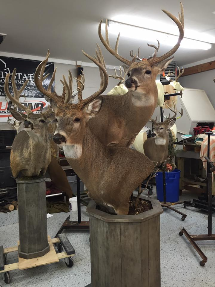 21 Double Pedestal Whitetail