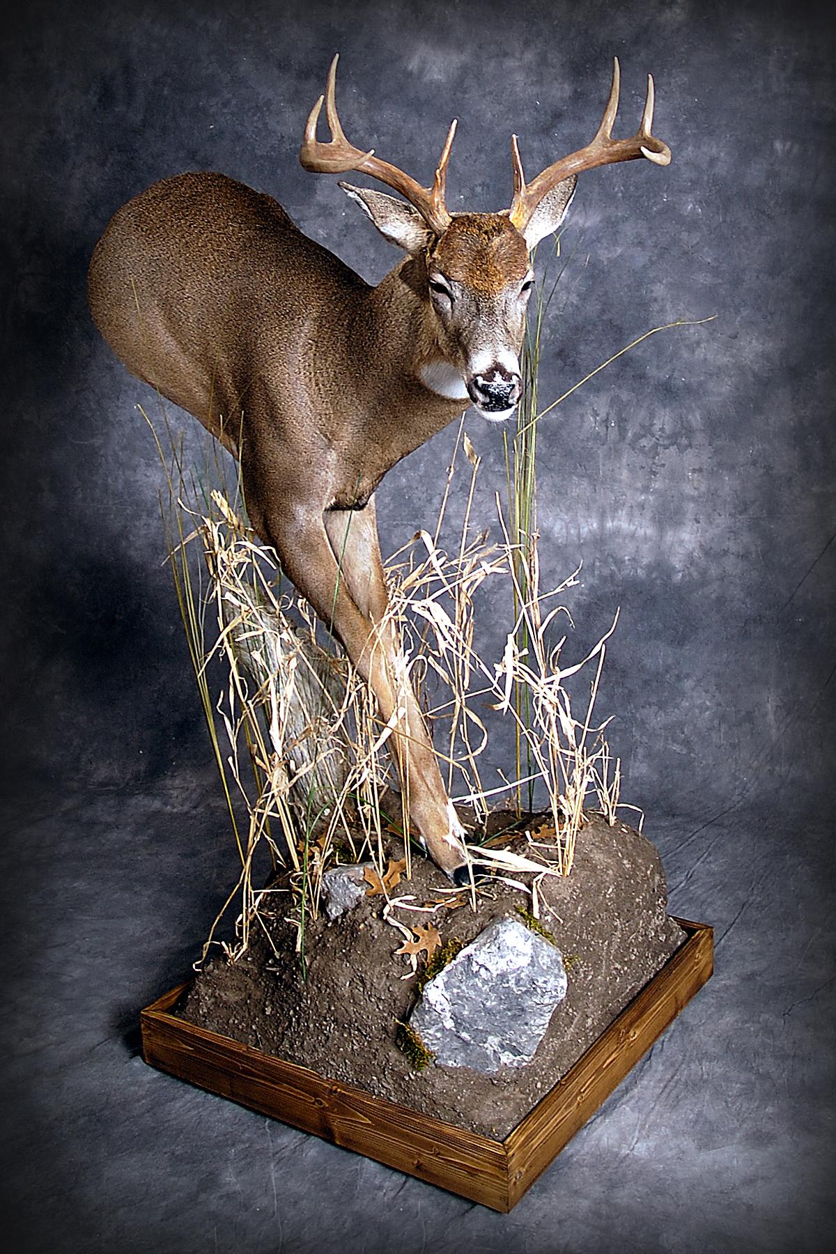 15 Whitetail Deer
