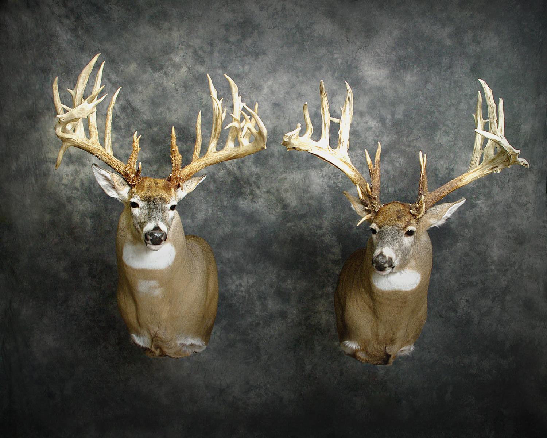 19 Amish Buck | Michigan #1 Buck