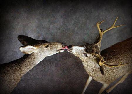 38 Doe | Buck
