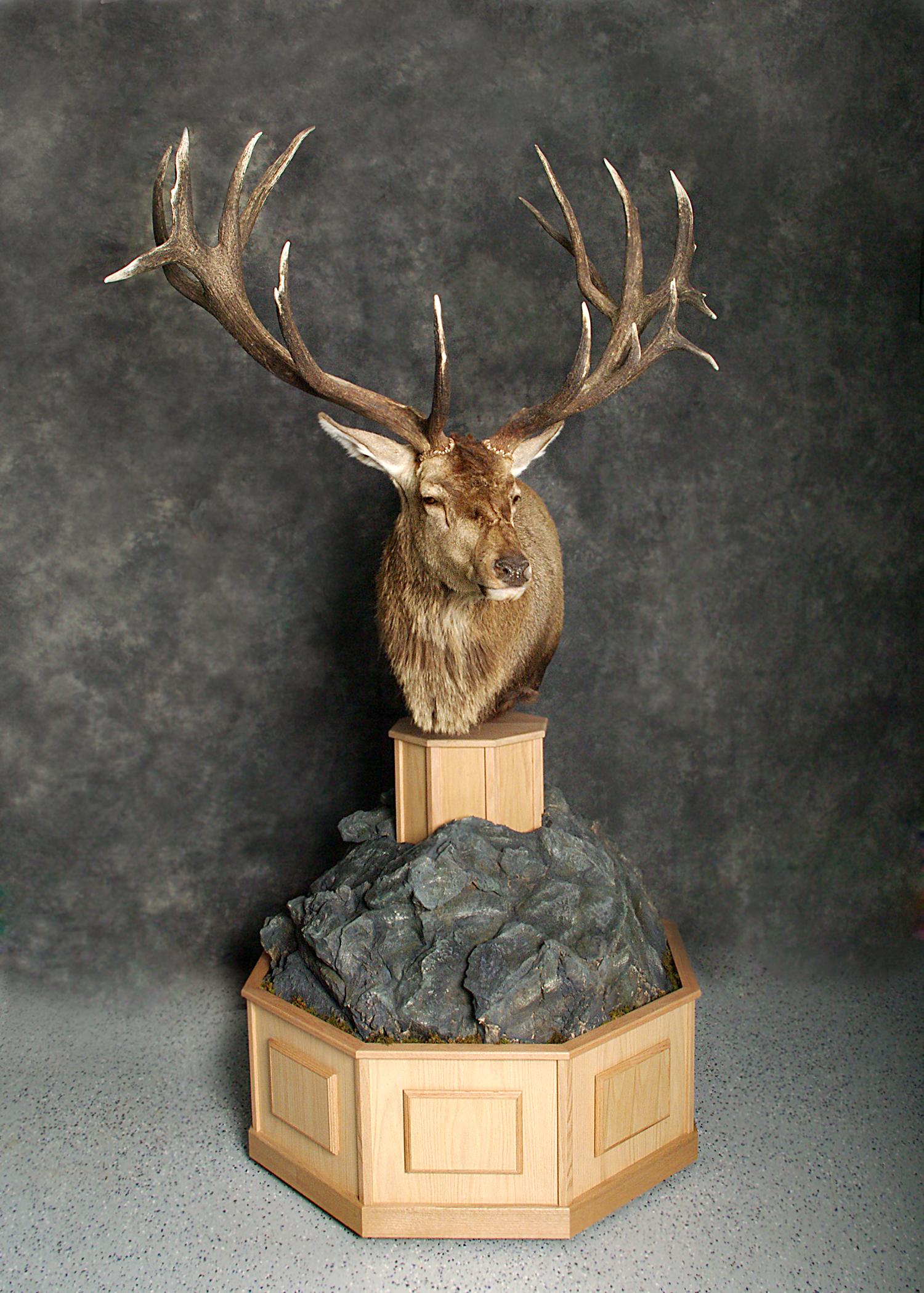 6 Elk