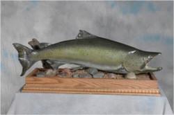 1 Salmon