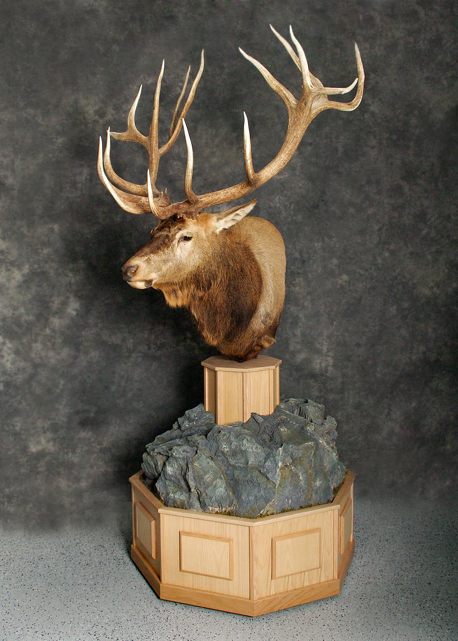 7 Elk
