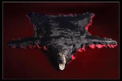 62 Bear Rug