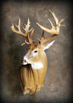 28 Whitetail Deer