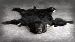 63 Bear Skin Rug