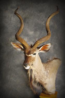 12 Kudu