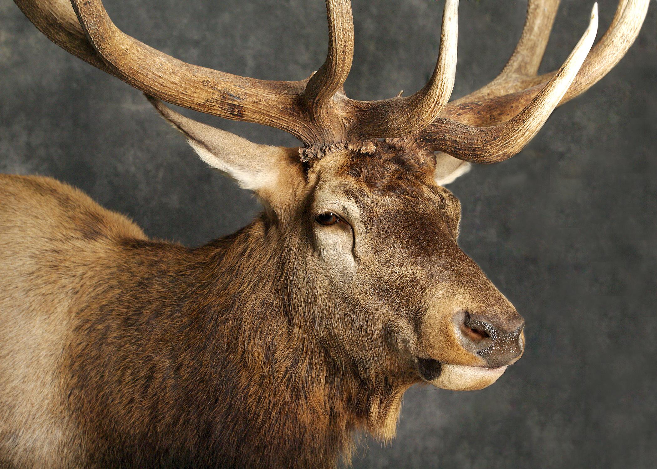 10 Elk