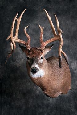 53 Deer-Name to come