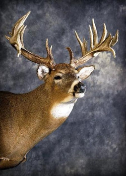 40 Whitetail Deer