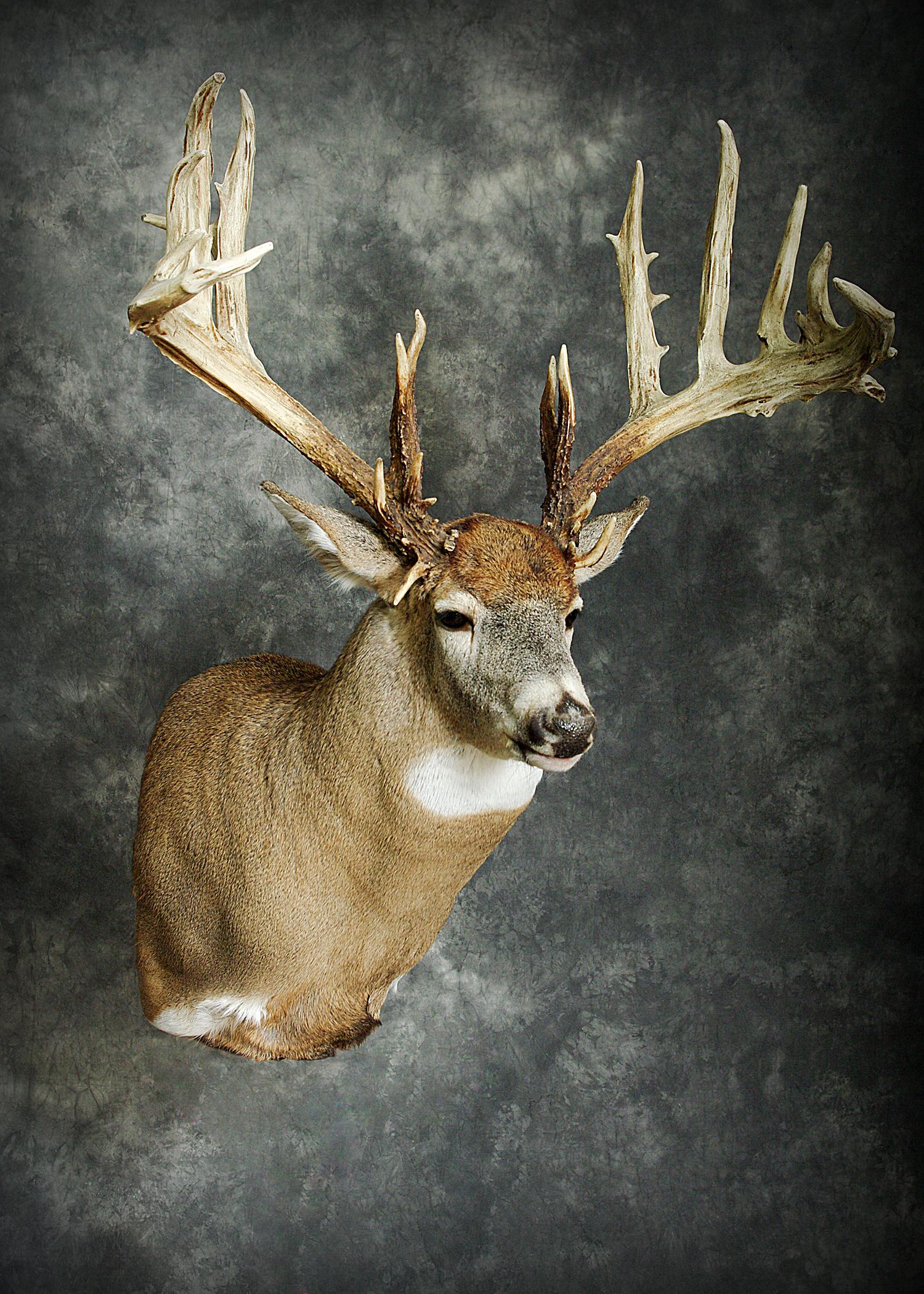 25 The Michigan #1 Buck