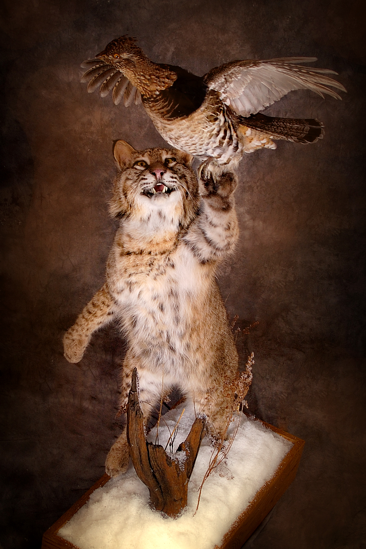 Bobcat | Grouse