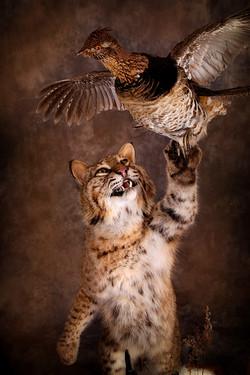 7 Bobcat | Grouse