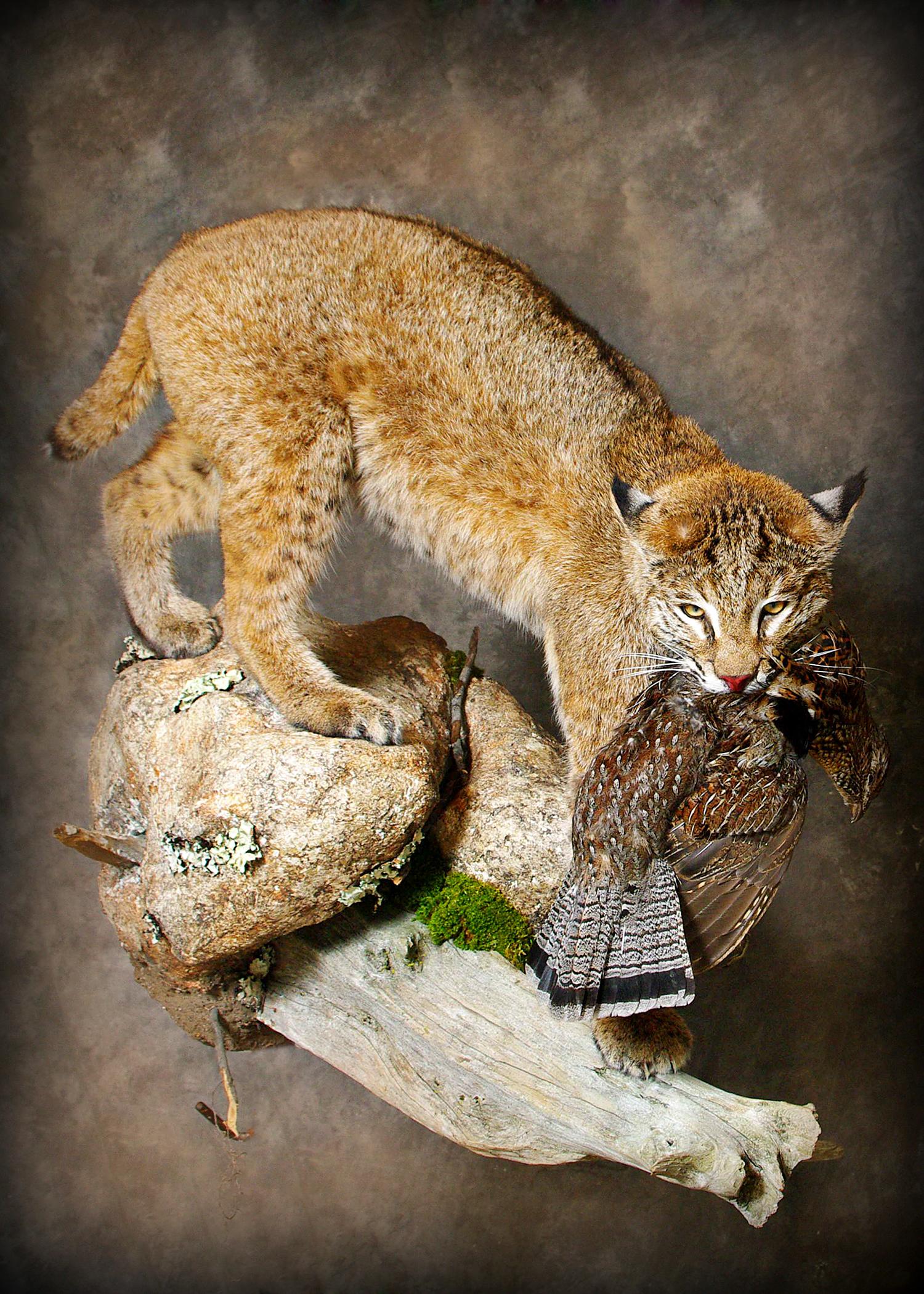24 Bobcat | Grouse