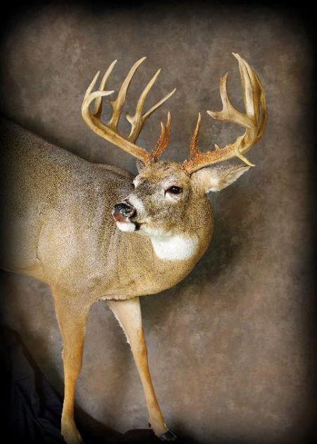 29 Marriott Buck