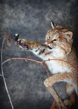 11 Bobcat