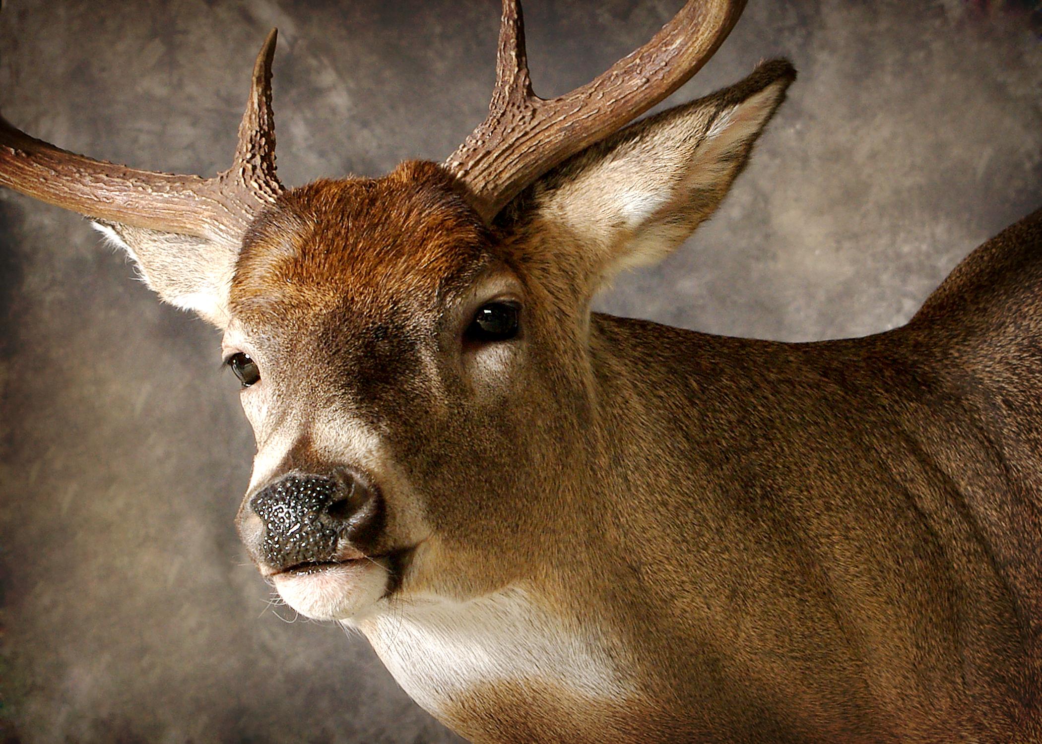 10 Whitetail Deer