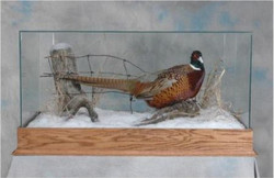 13 Pheasant