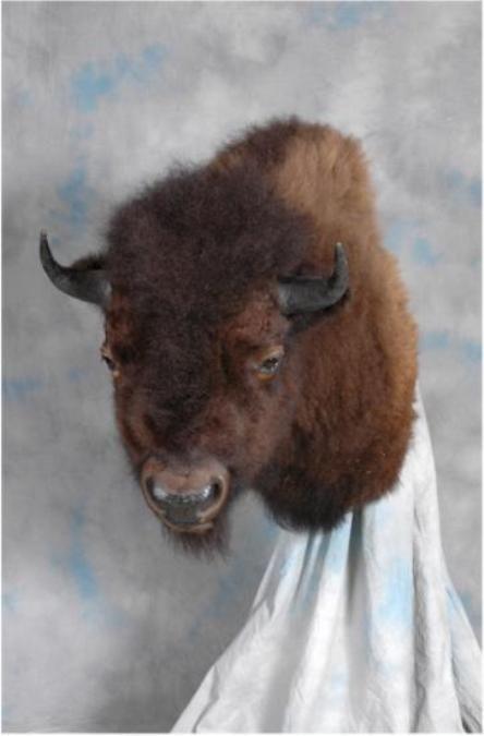 41 Buffalo