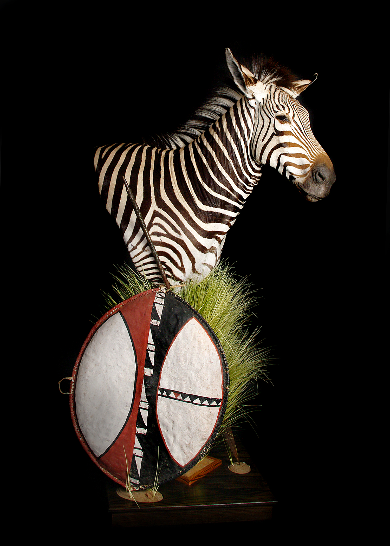 5 Zebra