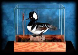 4 Merganser Duck