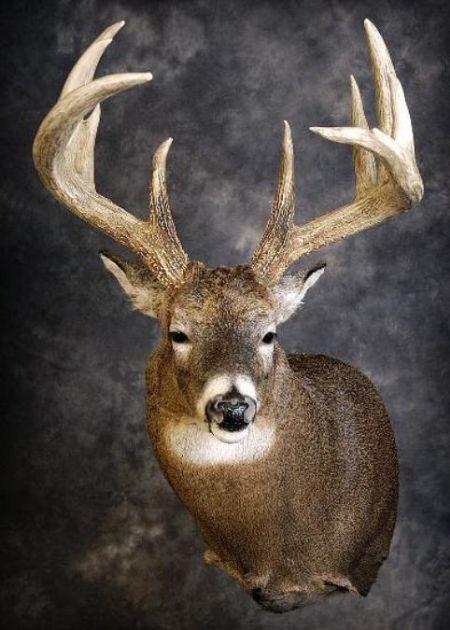 50 Whitetail Deer
